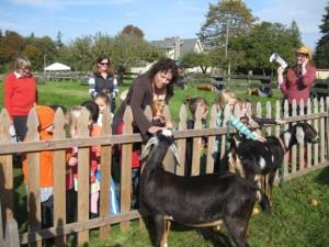 debbie-goats pp